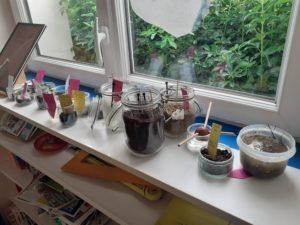 Expériences sur la germination